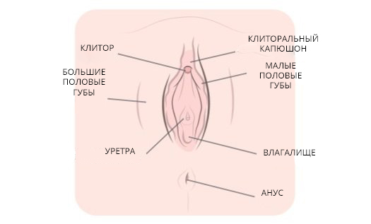 Как можно мастурбировать клитор без рук, фото дрочка ртом