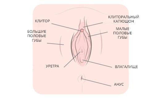 gde-nahoditsya-klitor-v-kartinkah-foto-pari
