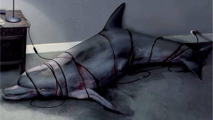 Дельфины не должны жить в неволе.