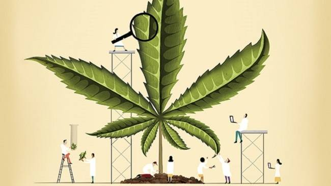 Марихуана лекарства от рака запрет на марихуану в сша